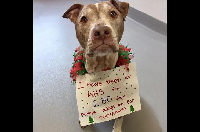 長い間、引き取り手がいない老犬がクリスマスに欲しいもの。シェルターのスタッフがそれに向け行動する