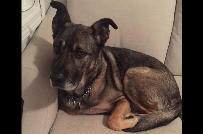 元飼い主家族から「邪魔もの」扱いされ空き家に置き去りにされた犬。これまでの悲しい過去と現在。