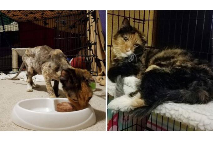 やせ細り骨と皮だけの状態で発見された猫が、懸命の治療とケアによって本来の姿を取り戻すまで