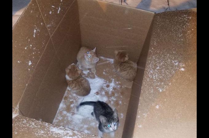吹雪の中捨てられた4匹の子猫 互いに寄り添うことで温め合い小さな命をつなぐ