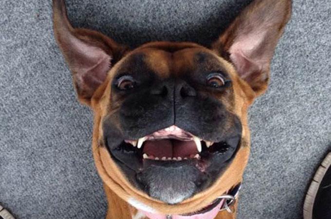 私たちを笑顔にしてくれる愛らしく魅力的な動物たちの自撮り画像まとめ