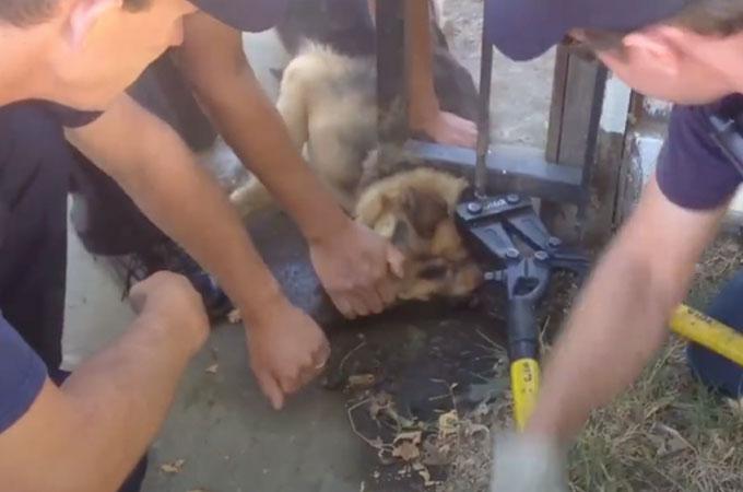 門の小さな隙間に首が挟まってしまった犬を救い出すため力を尽くす消防隊員