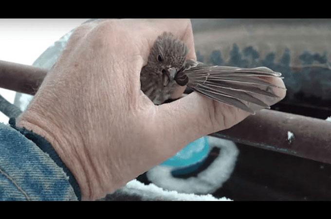 鉄パイプに足が凍りついてしまったスズメを男性が体温と息であたため救出