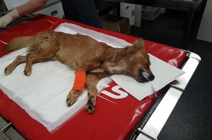 火災に巻き込まれ心肺停止の子犬。1人の消防士だけが最後まで諦めず救命措置をとった結果!