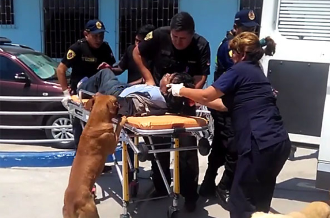 救急車で搬送される飼い主から離れようとしない2匹の犬の忠誠心に心を打たれた医療スタッフが特例を出す