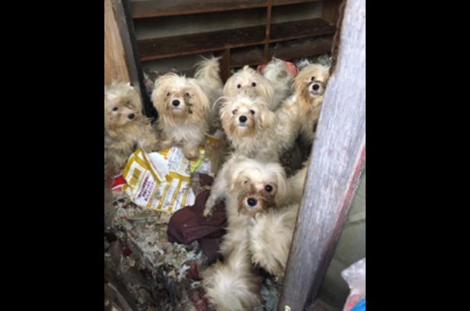 長崎県の民家で不妊治療をせず繁殖を繰り返し、劣悪な環境にいた計50匹の犬を保護。