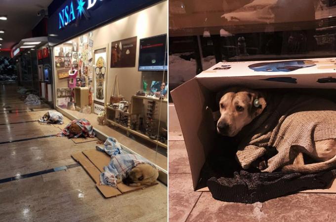 寒い外で生活する野良犬や野良猫たちのためを想い、地元の人たちが考えた様々な工夫と思いやり