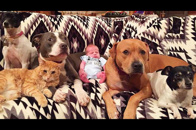それぞれの性格を活かし、夫婦の間に生まれた赤ちゃんを見守る5匹のペットたち。