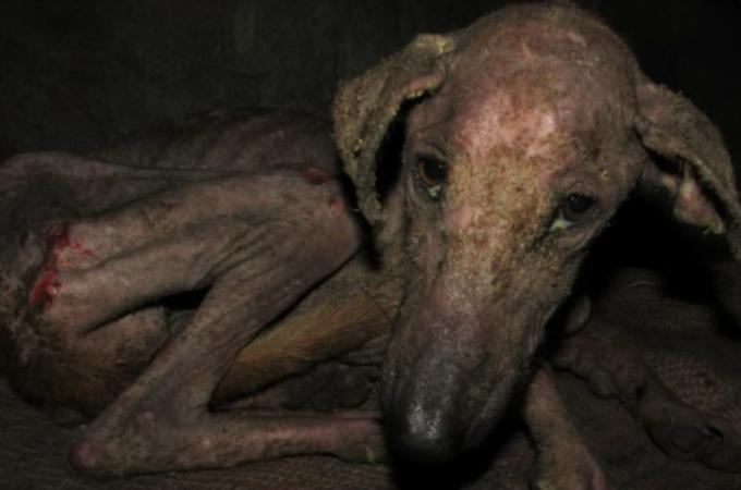 エサを探しに行く力もなく、廃墟の地下で暮らしていた1匹の犬。保護され、本来の姿を取り戻す。