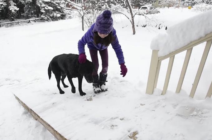郵便配達員を出迎えてくれる老犬のために、休日を使ってスロープを作ってあげた男性。