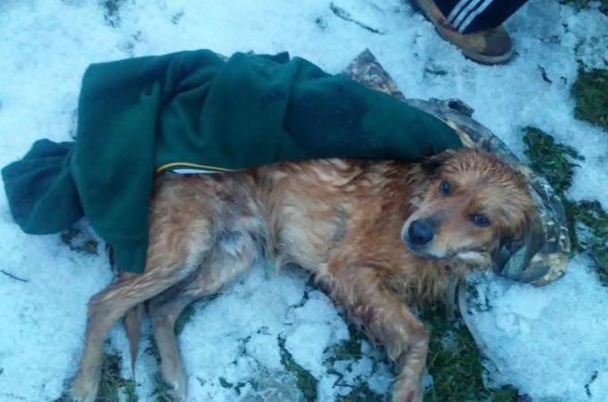 車の跳ね飛ばされ瀕死の状態だった犬。保護後に受ける多額の手術費用が多くの人によって募られる