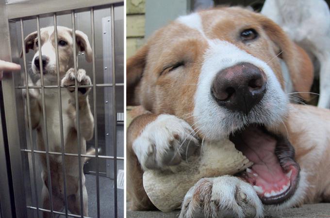 施設にいた時の暗い表情から、里親と出会い表情が明るく瞳に輝きが戻った犬たち17選