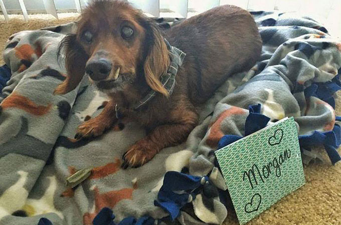 飼い主が亡くなり18歳の高齢で行くあてを失った犬が第二の人生を歩きだす