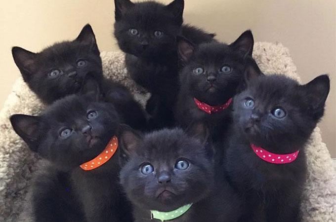 飼い主の引越しをきっかけに寒空の下捨てられた黒猫 迎えいれてくれた女性に6匹の素敵な命を運ぶ