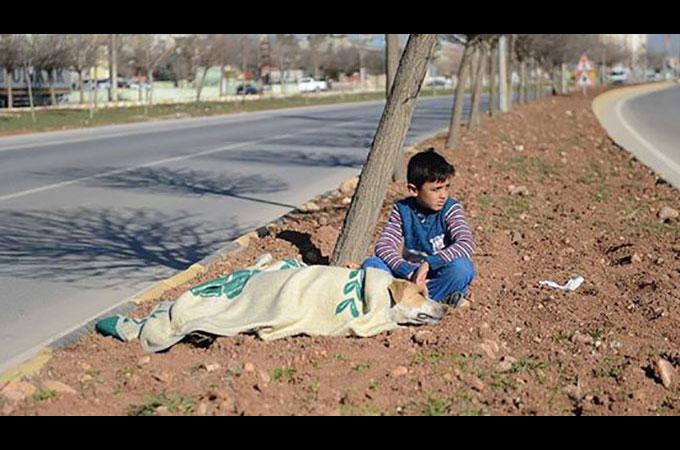交通事故にあい亡くなった野良犬を優しくそばで支え続けた少年の行動に賞賛の声