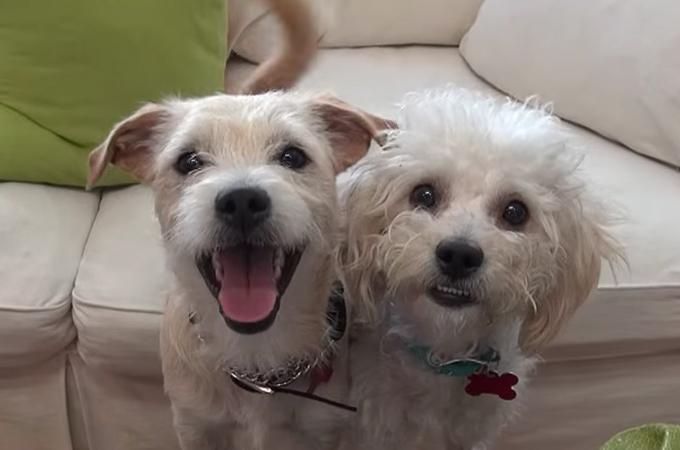 ゴミ置場で過ごす2匹の野良犬を保護。そしてその後、その2匹が見せてくれた最高の笑顔に胸を撫で下ろす