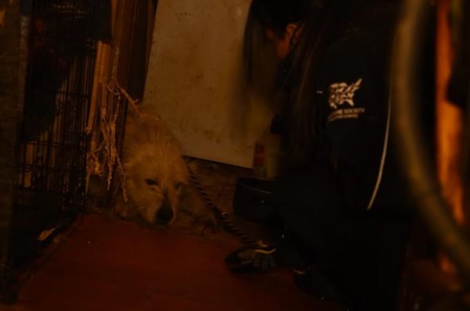 劣悪な環境のパピーミルから保護された犬が、救助してくれたスタッフにとった行動とは