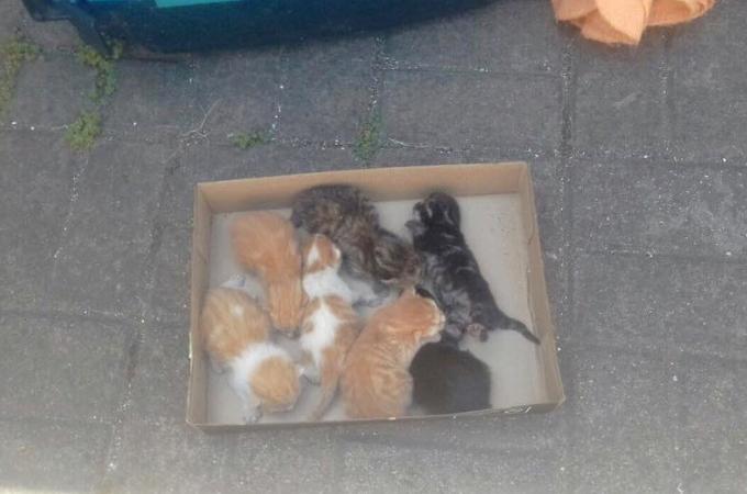 子猫を6匹保護した男性。その子猫たちの様子を見て「あることに」気付き、ある行動を起こす