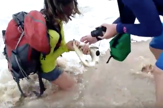 ビーチに観光に来た夫妻が、泳いでいたサメを捕まえ写真を撮ろうとした、ところ多くの代償を払うことになる