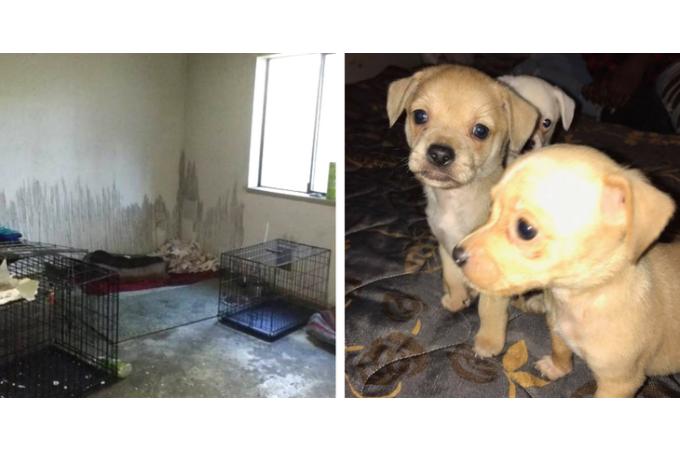 新設したシェルターで、これから幸せを手にいれるはずの子犬たちが火災に巻き込まれ命を落とす