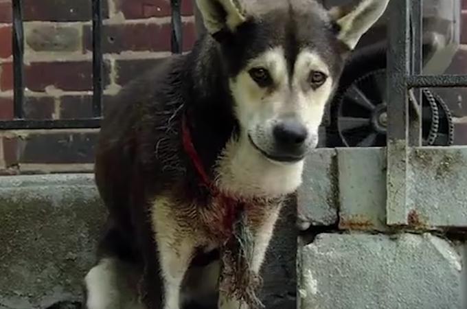 首元に血が滲んでいる犬が発見され保護される。そして、出血の原因とその理由に胸が締め付けられる