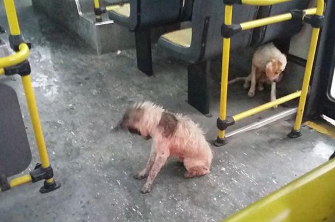 激しい雷雨にさらされていた野良犬たちをバスの運転手が救い、その行動に称賛の声が寄せられる