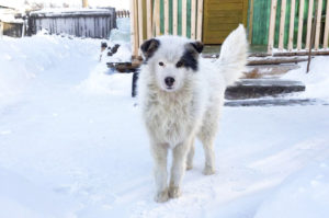 氷点下20℃の極寒の中、2日間も母親に置き去りにされてしまった男の子。そして、飼い犬が男の子を救う
