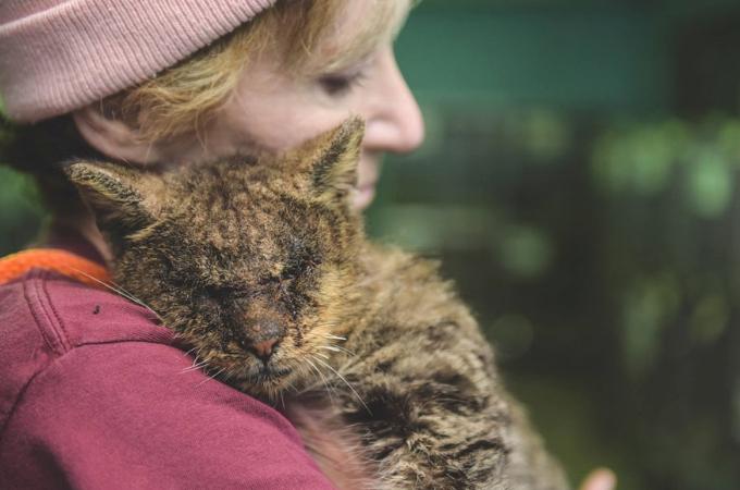 誰も触ろうとしない猫を優しく抱き上げる女性。そして、その猫の人生が大きく変わる