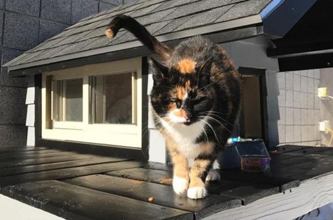 警察署に居座り続けマスコット的存在だった三毛猫が、手に入れた豪邸。その後、快適な生活を送ることに