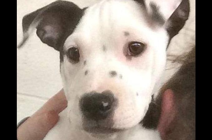 施設で生まれた子犬の右耳にはある特徴が!Facebookに投稿後、話題となり2時間で新しい家族が決まる!