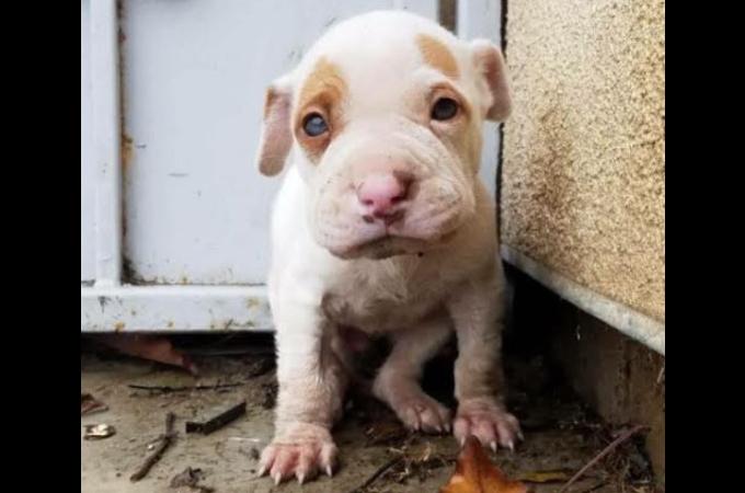 捨てられていたのを拾われ売りに出されるも、売れないからとまた捨てられた子犬が安心の場所を手に入れるまで