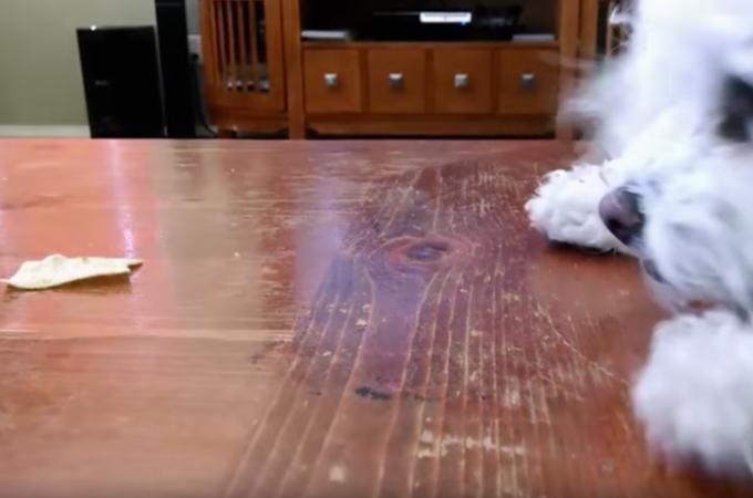 【動画】テーブルの上に置いてあるお菓子を発見した犬。なんとか取ろうと努力するも、最悪な結果が待っていた