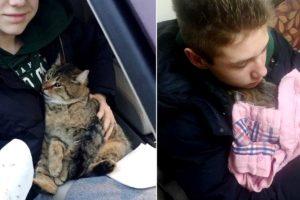 高速道路から投げ出された猫を見ていた少年とその母親。パニックになっている猫を救うため行動を起こす