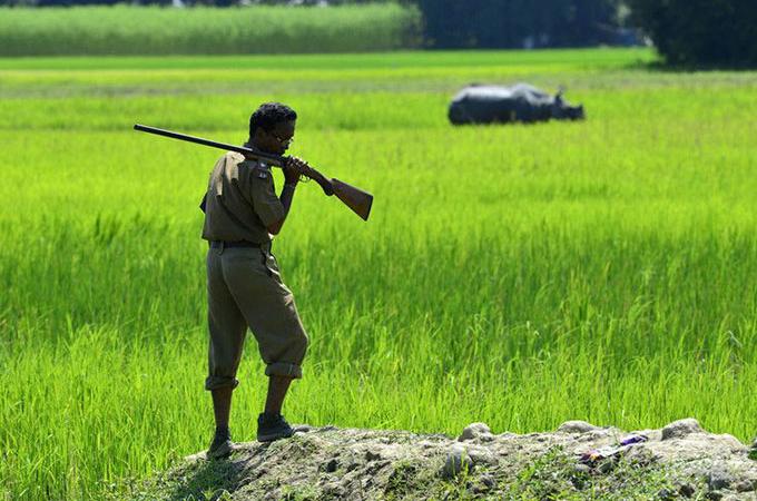 絶滅の危機にあるインドサイを密猟者から守るため、銃殺が許可された国立公園。その効果と様々な意見とは