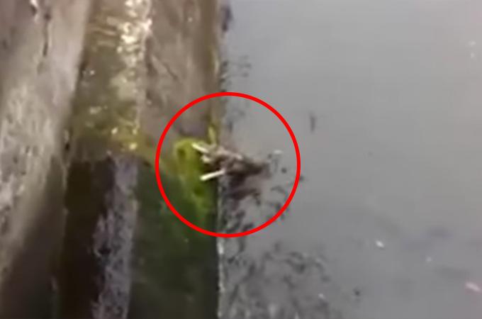 川に落ちてしまい溺れかけていた1匹の犬を救った男性。そして、救助後に犬のとった行動とは