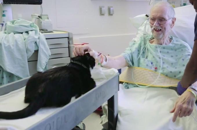 保護猫だった新しく手に入れた場所は病院。重病患者に元気と希望を与える病院の天使となる。