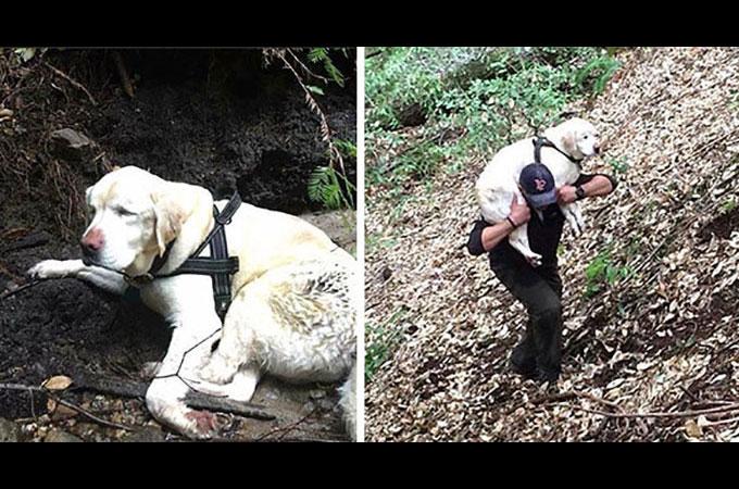 行方不明となった緑内障のため視力を失った老犬が8日後奇跡的に生還
