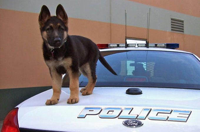 私たちのために大切な仕事をして支えてくれる犬たちの初出勤の日を写した画像10選
