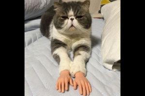可愛い?それとも不気味? 人間の手を持った1匹の猫の写真がツイートされ話題に