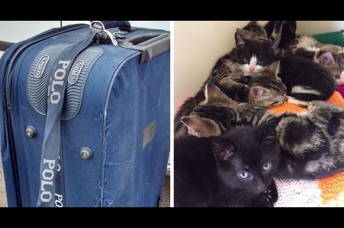 古いスーツケースに入れられ線路上に捨てられた猫たちを救い出した犬