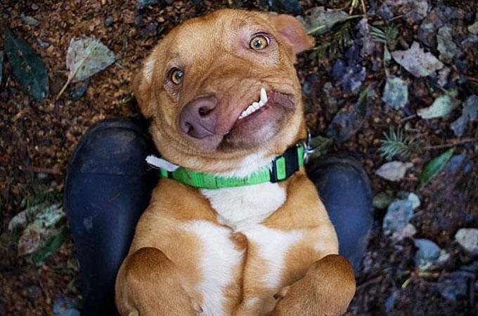 顔に異常を持って生まれたことで殺処分のリストに載せられた悲しい犬の運命