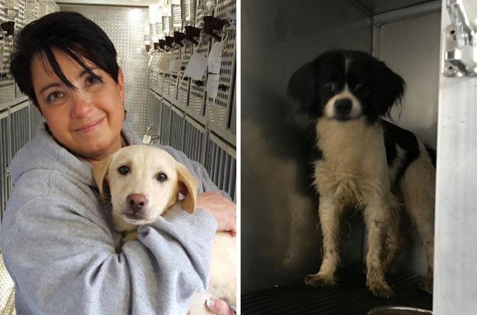 韓国の犬肉市場から救い出された55匹の犬たちがアメリカに渡り幸せを手にする