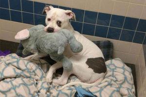 唯一の友人はゾウのおもちゃだった 飼い主に捨てられた悲しいシェルター犬