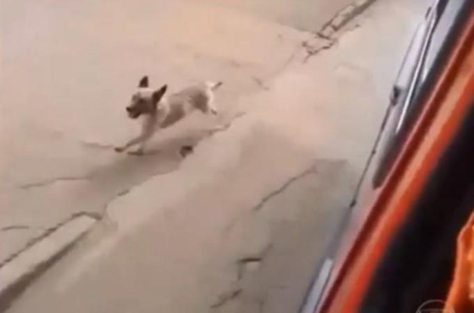 てんかんの発作を起こし救急車で運ばれた男性。その救急車の後を必死で追いかけてくる犬の姿とは