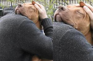 元飼い主に捨てられた犬。しかしそれでも人間が好き。その人間に対する忠実さと優しさに胸が締め付けられる