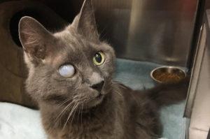 右目を失明した18歳の老猫が飼い主に捨てられ、その後施設の職員の尽力によって第二の人生を歩むまで