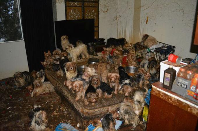 保護要請を受けた団体が現場に到着すると、そこにいたのは92匹の犬たち。その目を疑う光景とは