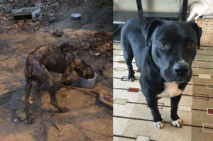 水や食料を探しながら、野良犬としてギリギリの生活をしてきた犬が里親との出会いで生まれ変わる
