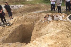最愛の飼い主を亡くした犬が、棺の入った車を追いかけ、最後の最後まで見守り続ける姿に胸を打たれる