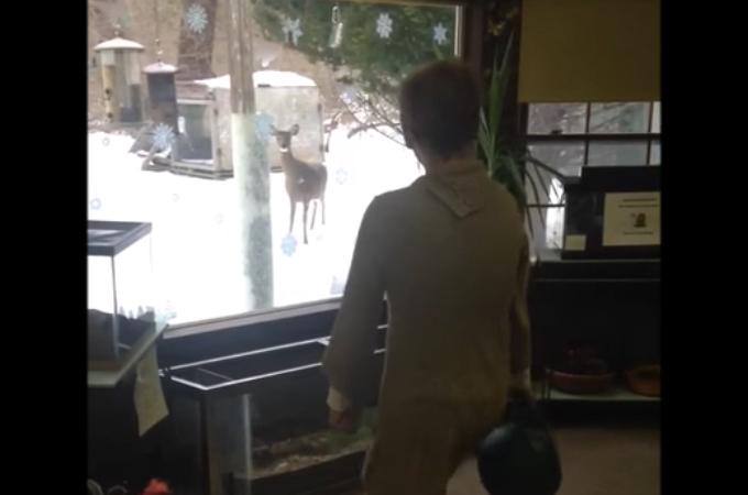 【動画】窓の外にいる野生のシカを見て足踏みをした女性。そして、そのシカがとった驚きの行動とは
